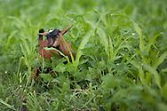 Photo Randy Vanderveen.Nyrusange, Rwanda.A young goat