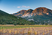 Mt. St. Helena rises above vineyards near Calistoga in Napa Valley, Northern California.