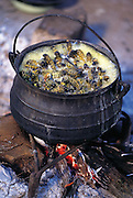 """A simmering pot of mopane worms in Botswana. The mopane worm is actually the caterpillar of the anomalous emperor moth (Imbrasia belina), one of the larger moths in the world. """"Mopane"""" refers to the mopane treee, which the caterpillar eats. (Man Eating Bugs page 123 Inset)"""