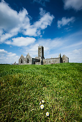 Flowers in front of Ross Errilly Friary, County Galway, Ireland