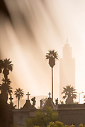 Palm trees growing in Christian cemetery at sunset, Casablanca, Morocco