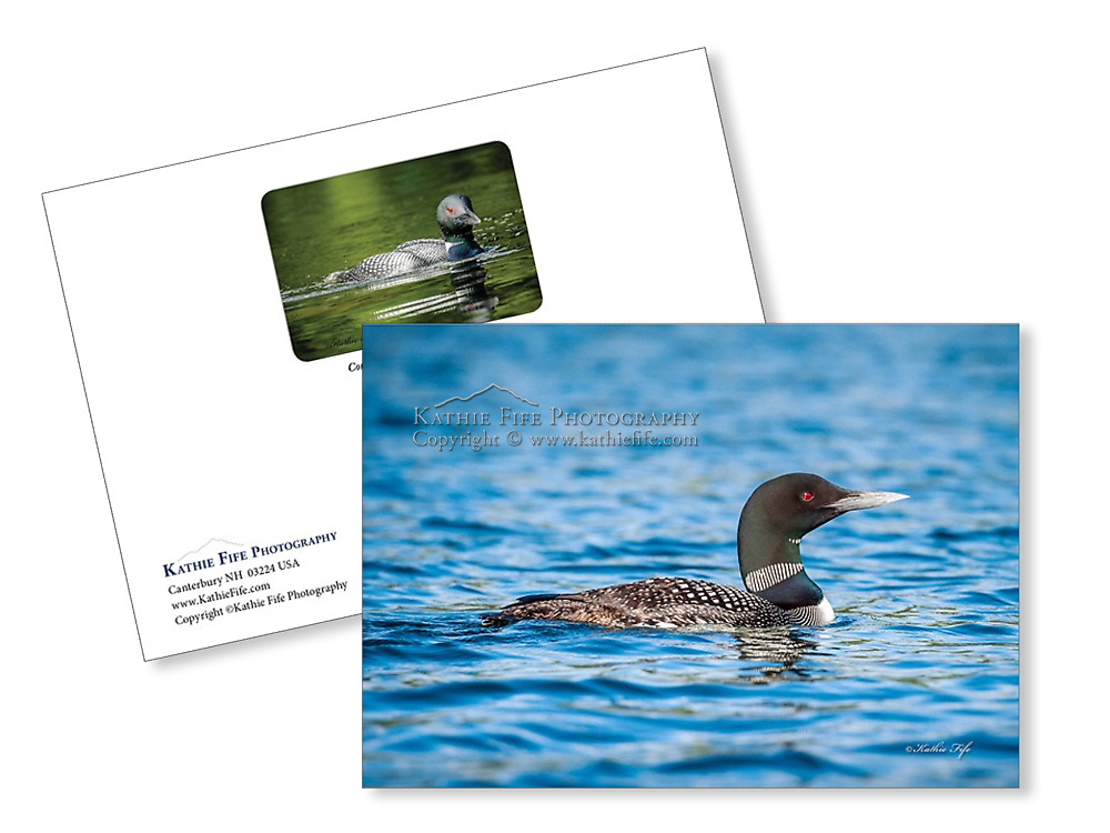 Loon greeting card 5x7 100% recycled paper