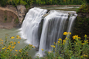 Yellow summer wildflowers frame the Middle Falls of the Genesee River in Letchworth State Park, New York. The Middle Falls of the Genesee River has a height of 107 feet (33 meters) and is about twice that wide. The area was once submerged under an inland sea, which left deposits that formed sandstone and shale. The eroded the river bed forming the Letchworth Gorge, which is 22 miles (35 km) long and as much as 550 feet (168 meters) deep.