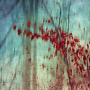 Red leaves on some twigs on a misty and rainy day - texturized and manipulated photograph<br /> Redbubble Prints and moew: https://www.redbubble.com/shop/ap/16033069?asc=u