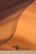"""Big Daddy"" sand dune with lone tree, Sossusvlei desert, Namib-Naukluft National Park, Namibia."