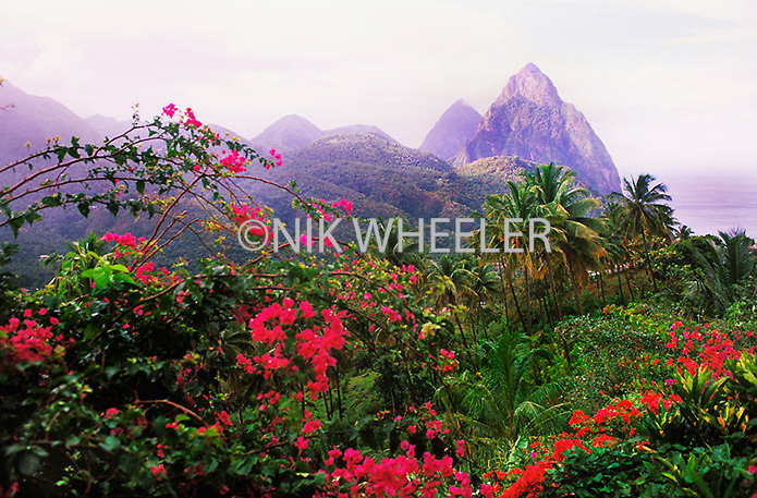 View of the Pitons with flowers near Souffrieres, on the tropical island of St. Lucia in the Caribbean