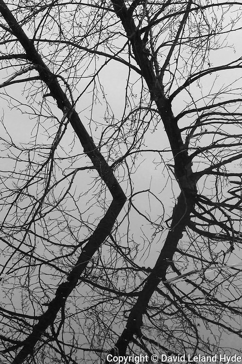 Leaning Alder Trees, Indian Creek, Abstract Art, Taylorsville California, Sierra Nevada Mountains, dark forest, black and white photography, 2014 by David Leland Hyde.