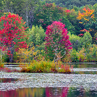 New  England Fall Foliage fine art photography of early fall colors reflecting in a local pond in Westborough, Massachusetts.<br /> <br /> Westborough Massachusetts Fall Foliage photography images are available as museum quality photography prints, canvas prints, acrylic prints, wood prints or metal prints. Fine art prints may be framed and matted to the individual liking and interior design decorating needs.<br /> <br /> Good light and happy photo making!<br /> <br /> My best,<br /> <br /> Juergen