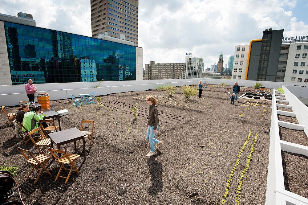 Nederland, Rotterdam, 23 juni 2012.Dag van de architectuur, thema: architectuur en voedsel. In Rotterdam is een groentetuin aangelegd op het dak van een gebouw.  Tuinen op daken houden regenwater langer vast en dat is gunstig. Voedsel plaatselijk telen scheelt transportkosten en benzine..Foto (c): Michiel Wijnbergh