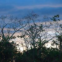 South America, Peru, Amazon. Tree branches of the Amazon.
