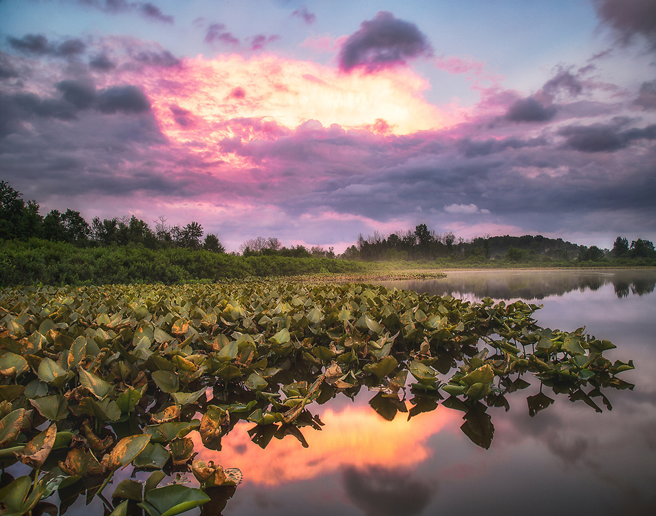 """After the Storm II - Pink Sunset and Pond Lily Pads<br /> <br /> Available sizes:<br /> 11"""" x 14"""" print <br /> 11"""" x 14"""" canvas gallery wrap<br /> <br /> See Pricing page for more information. Please contact me for custom sizes and print options including canvas wraps, metal prints, assorted paper options, etc. <br /> <br /> I enjoy working with buyers to help them with all their home and commercial wall art needs."""