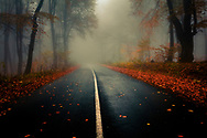 Raod in a foggy forest