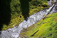 Salt Creek Falls, Oregon.