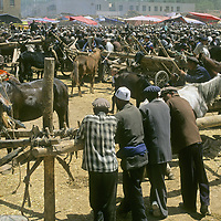 Uygar men and animals crowd the animal sales lot at the weekly bazaar in Kashgar (Kashi), a town on the ancient Silk Road in Xinjiang, China.