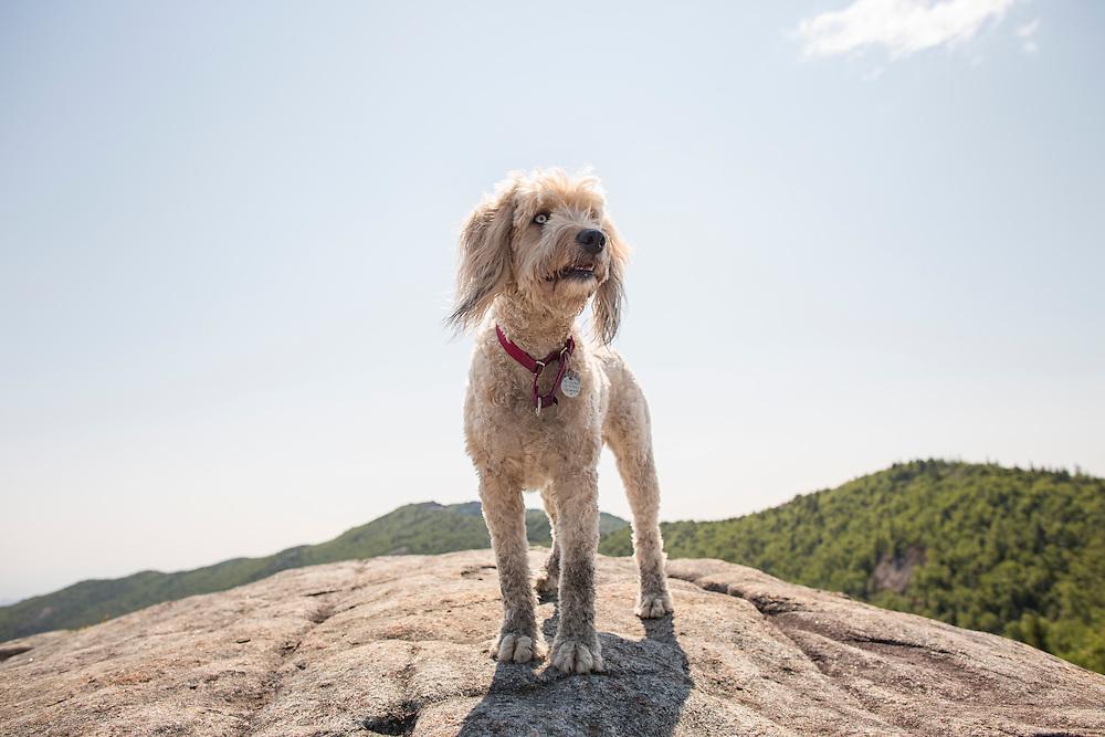 fluffy mutt standing on a mountain top