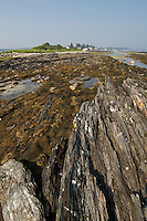 A visit to Harpswell, Maine last summer..