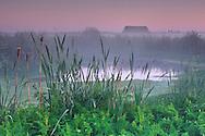 Predawn mist in farmlands beyond the Arcata Marsh, Arcata, Humboldt County, CALIFORNIA