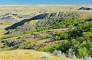 Killdeer Badlands (East Block)<br /> Grasslands National Park<br /> Saskatchewan<br /> Canada