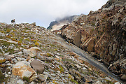 Liana Welty hikes into upper Gothic Basin, Mount Baker-Snoqualmie National Forest, Washington.