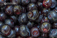 Closeup of freshly picked huckleberries in Whitefish, Montana, USA