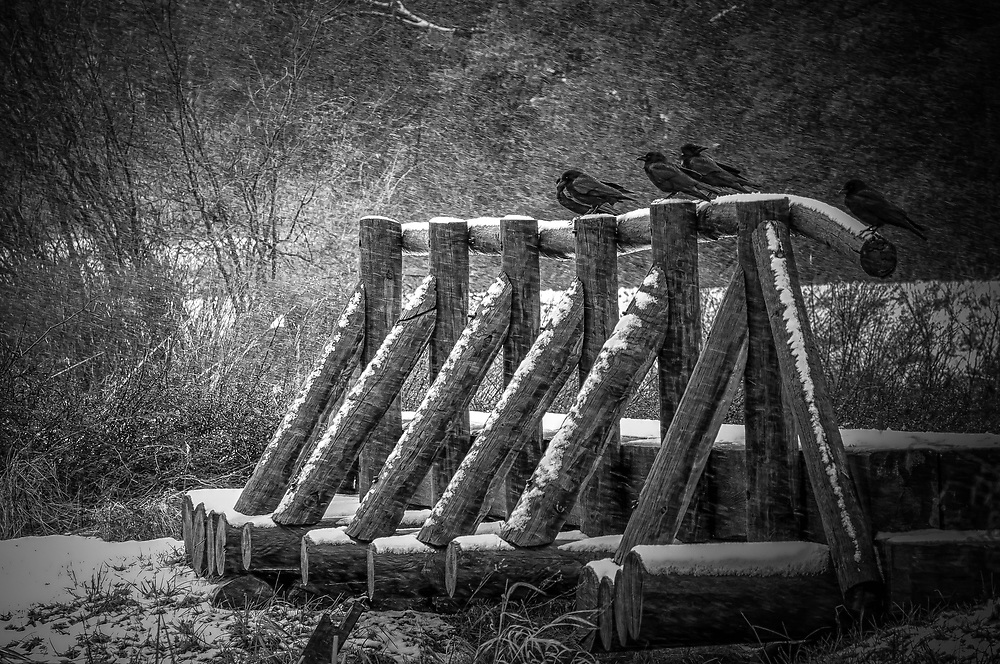 I was amazed to see these birds sitting out the storm.