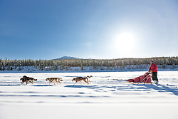 Dogmushing at Uncommon Journeys in the Ibex Valley near Whitehorse, Yukon, Canada