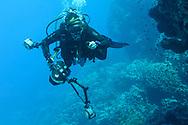 Unterwasser-Impressionen beim Riff Shaab Claudio südöstlich von der Lahami Bay am Roten Meer von Aegypten