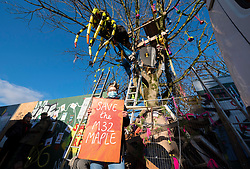© Licensed to London News Pictures; 31/12/2020; Bristol, UK. Local plumber MIMI WALKER, who helped to save three trees from building workers exactly a year ago, holds a sign joining others for the Save The M32 Maples Campaign to symbolically chain themselves to a Norway maple tree while observing Covid safety precautions, gathering for the first anniversary of a property developer's attempted 6am chainsaw massacre on new year's eve 2019 which resulted in three mature maple trees being saved. Now there is only one maple tree left after two more trees were axed by contractors in November at 5.30am, and during which campaigners say safety standards were violated for the third time. Since then the campaign has kept up a regular early morning vigil, and have built strong fortifications around the surviving tree, named Crimson King where it stands on Lower Ashley Road in the St Pauls area of Bristol close to the M32 motorway. The campaign wants the importance of mature trees reflected in council policy and that developers integrate their projects whilst preserving existing trees to enhance the environment and help remove pollution in what is a traffic congested area. Photo credit: Simon Chapman/LNP.