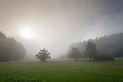 Morgennebel auf der Höri, Bodensee, Untersee, Baden-Württemberg, Deutschland