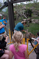 Philadelphia Zoo, Big Cat Falls, trainers working with young lions..Philadelphia, Pennsylvania, PA USA.  Photo copyright Lee Foster, 510-549-2202, lee@fostertravel.com, www.fostertravel.com. Photo 249-30844
