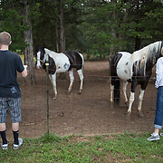 Petting horses on a farm in Tennessee.