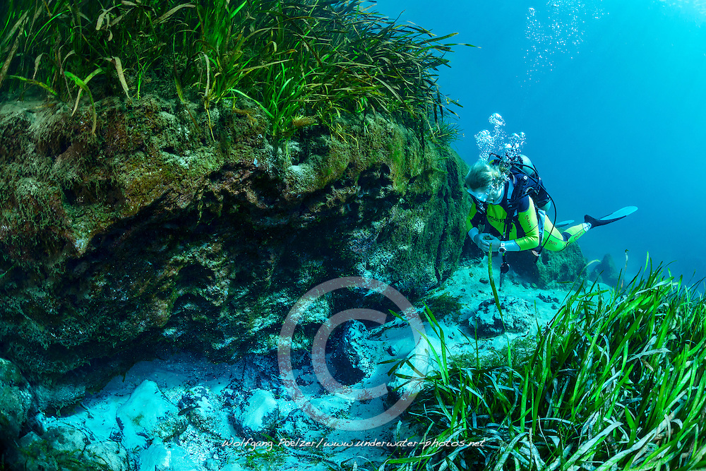 Taucher bei einem kleinen Quelltopf vom Rainbow River, Scuba diver close to a small spring in the Rainbow River, Dunnellon, Marion County, Florida, United States, USA, MR yes, Februar 2014