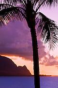 Silhouetted palm tree and Na Pali Coast cliffs at sunset, Island of Kauai, Hawaii