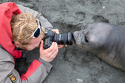 Peter Webster Photographing Southern Elephant Seal