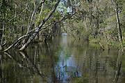 Altamaha River<br /> Barrier Islands, Georgia<br /> USA
