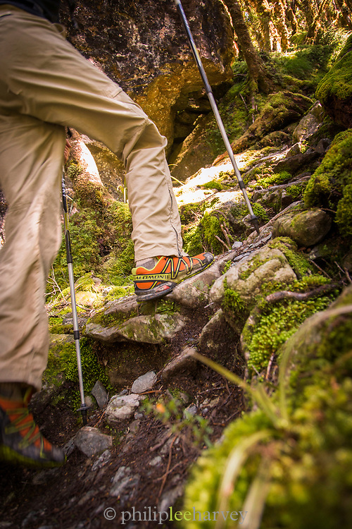 Hiker using poles on Routeburn Track in New Zealand