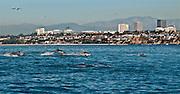 Dolphin Fest in Newport Beach