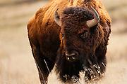 National Bison Range,Montana.