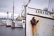 Boats in Salmon Bay