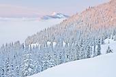 Mount Tahoma Trails