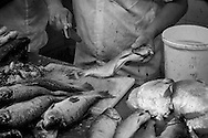 A fishmonger trims a fish ready for sale in the covered market on the riverside in Manaus, Amazonia, Brazil. Photo by Andrew Tobin/Tobinators Ltd