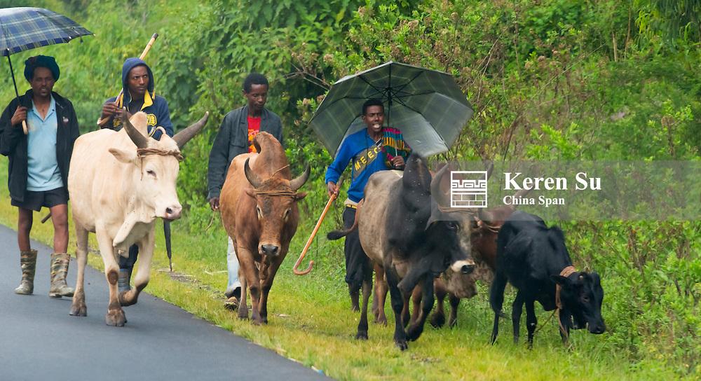 People traveling along the road in rain, between Addis Ababa and bahir Dar, Ethiopia