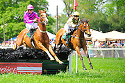 24  March, 2012:  Time for Tutt (left) and Home Grown Lass in the G.H. Bostwick Hurdle at Aiken.