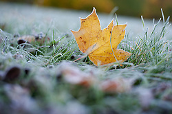 ©Licensed to London News Pictures 19/11/2019.<br /> Sidcup,UK. A frozen leaf. Temperatures drop overnight making for a very cold and frosty Tuesday morning. Freezing cold weather conditions at Footscray Meadows in Sidcup, South East London. Photo credit: Grant Falvey/LNP