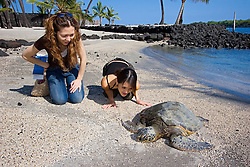 Woman visitors observing Green Sea Turtle, Chelonia mydas, basking in the sun on beach at Keone`ele Cove, the Great Wall bult in the mid-1500s, and Coconut Palms, Cocos nucifera, in background, Pu`uhonua o Honaunau or Place of Refuge National Historical Park, Honaunau, Big Island, Hawaii