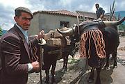 SPAIN, CASTILE and LEON San Miguel de Corneja, southwest of Avila; ox cart and men unloading firewood