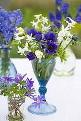 Spring flowers arranged in glass vases. Muscari armeniacum, Anemone blanda and Chionodoxa, Scilla sibirica, Hyacinth 'Multiflora White', Anemone coronaria 'Mr Fokker' and A. 'The Bride'