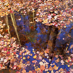 The Nature Conservancy land near Crommett Creek.  Fall leaves and reflections.  Durham, NH