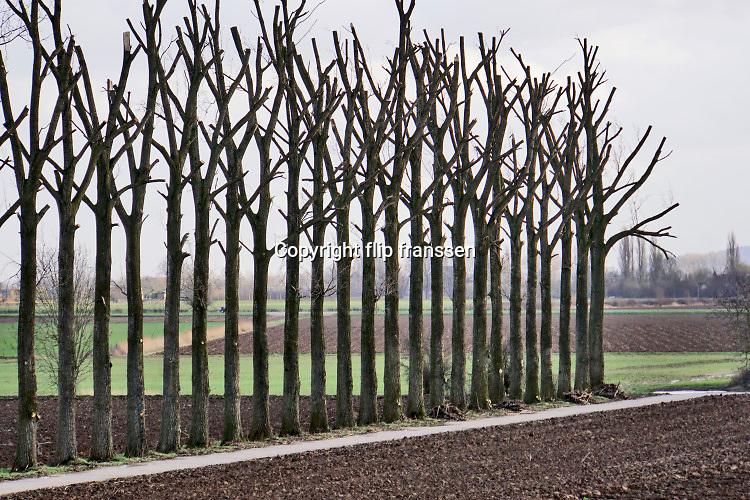 Nederland, Ooijpolder, 20-2-2020Akkerland met bomenrij waarvan de bomen gesnoeid zijn..Foto: Flip Franssen