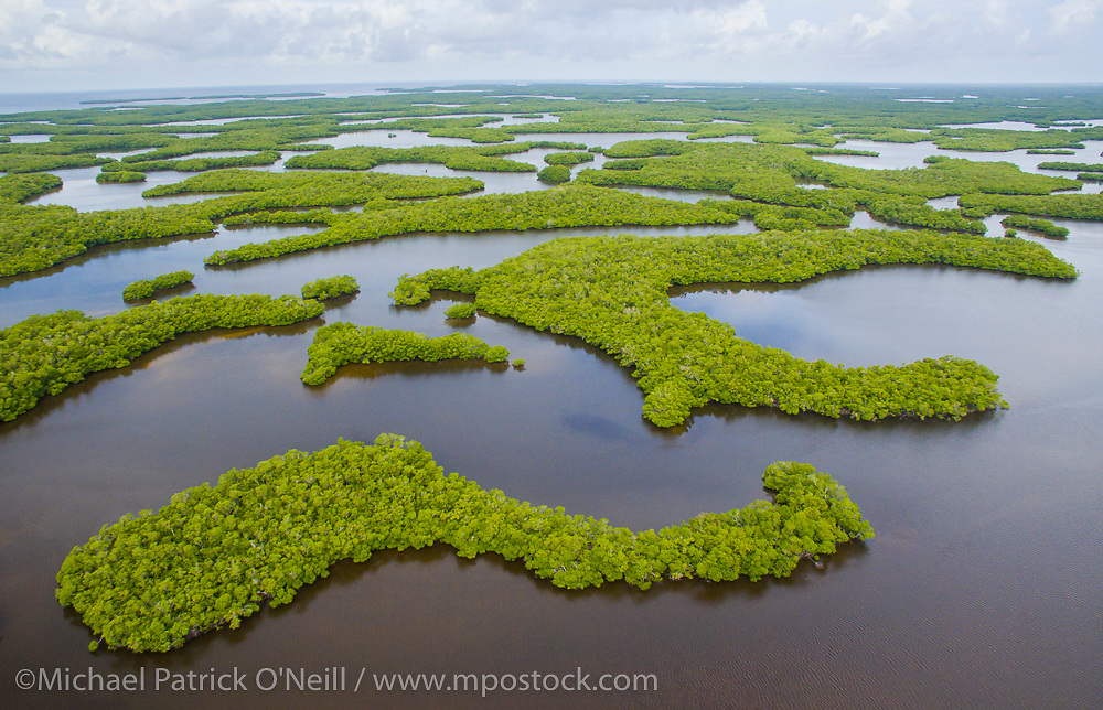 The Ten Thousand Islands, situated at the edge of Everglades National Park between southwest Florida and the Gulf of Mexico, are a maze of shallow tidal channels lined by mangroves and an important habitat for endangered species such as the sawfish and Florida manatee, among countless others.
